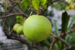 10 Surprising Benefits of the Grapefruit