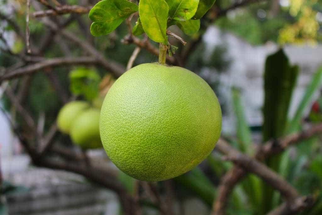 Benefits of the Grapefruit